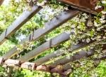 5 טיפים שיעזרו לכם לבחור את הפרגולה המושלמת לגינה