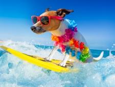 6 טיפים לשמירה על חיית המחמד שלכם בקיץ